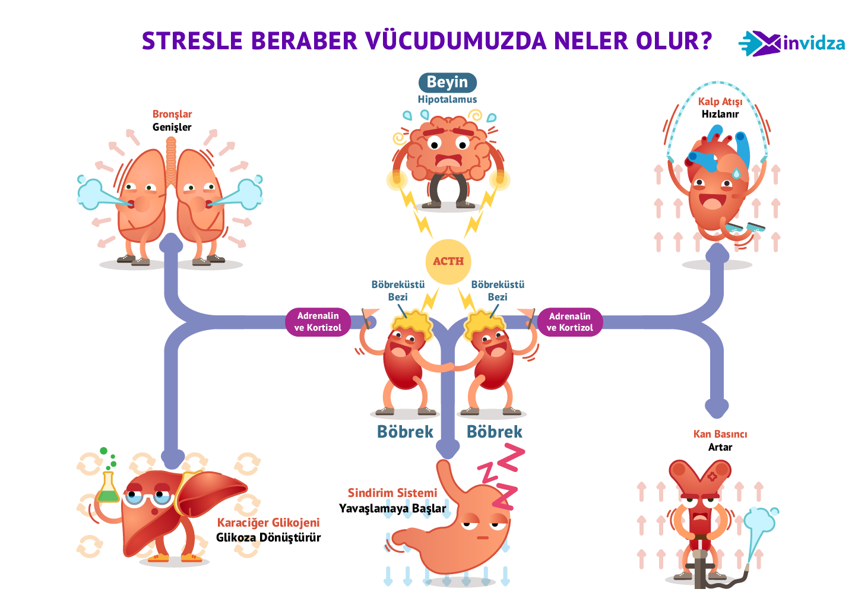 Stresle Beraber Vücudun Tepkisi İnfografik Anlatım